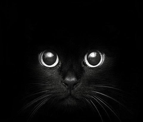 negros3