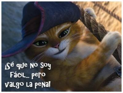 imagen-de-gatos-bonitos-persas-400x301